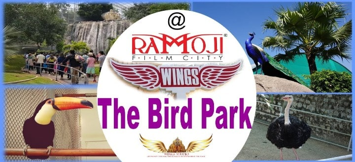 birds-park