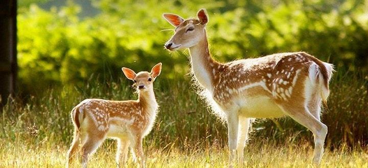 deer-park-in-ooty