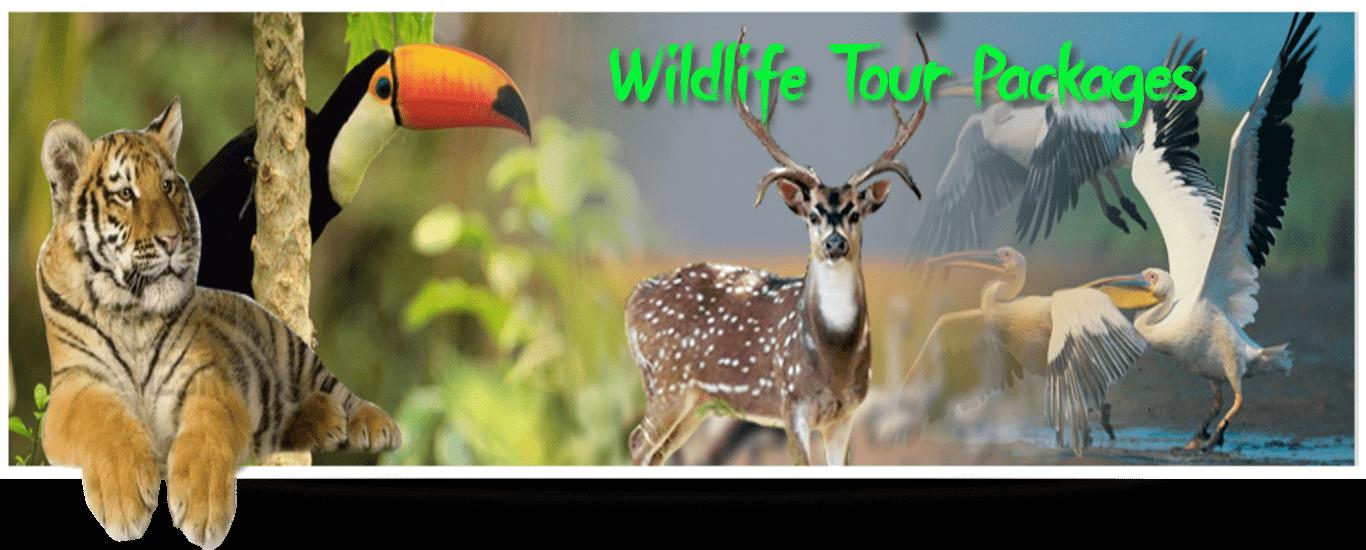 wildlife-tourackages