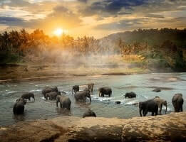 wildlife-tourism-packages