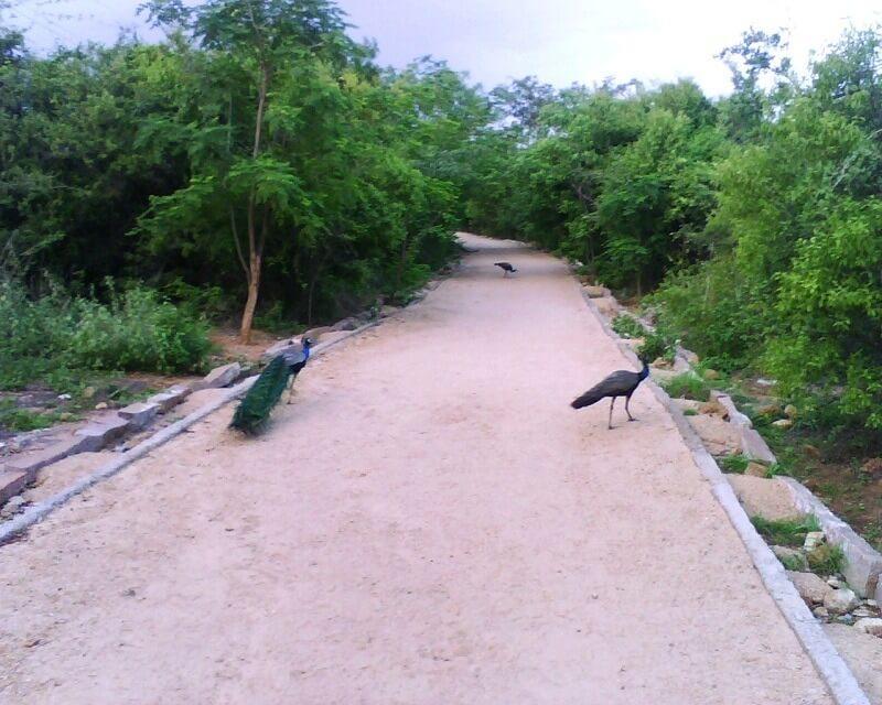 KBR National Park in Hyderabad