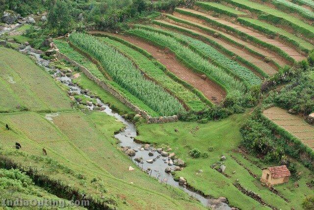 Nilgiri Plantation